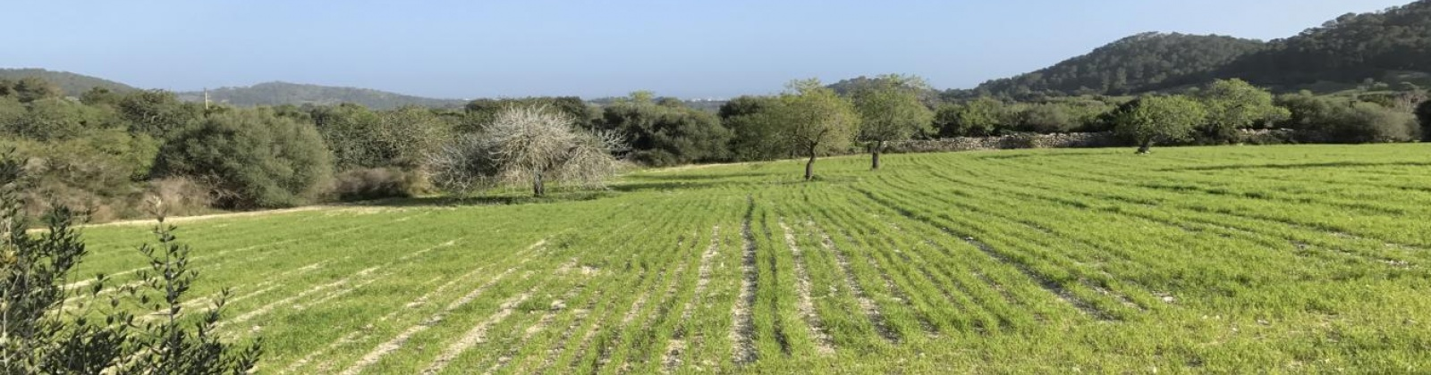 Land,For Sale,1011